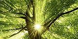 Artland Echt-Glas-Wandbild Deco Glass smileus Sonne strahlt explosiv durch den Baum Botanik Bäume Laubbaum Fotografie Grün 50 x 100 x 1,1 cm B6VC