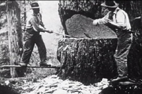 Lumber Industry History Pacific Northwest: Felling Forest Giants (1920s) [DVD] - Logging in the Early Days of the Giant Redwood Sequoias - Pacific Lumber