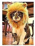 Polo honey Pet Costume Lion Mane Perruque pour chien ou chat Halloween Dress Up avec oreilles, tourne votre animal de compagnie dans un lion féroce