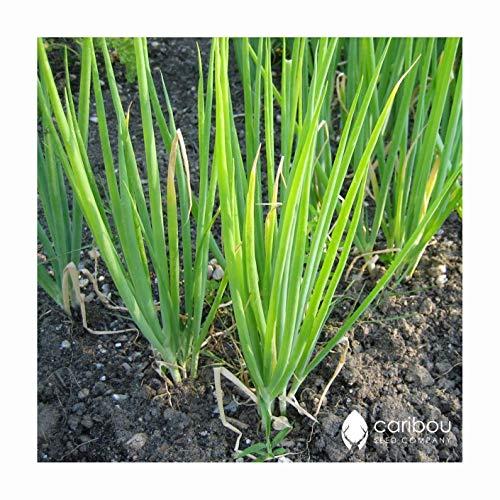 PLAT FIRM: SEEDS: SCHNITTLAUCHE 50 Samen - Pasta-Saucen, Brot- einfach zu wachsen, hohe Keim & quity