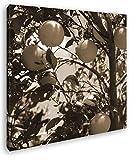 deyoli Orangenbaum mit Reifen Früchten Format: 40x40 Effekt: Sepia als Leinwandbild, Motiv auf Echtholzrahmen, Hochwertiger Digitaldruck mit Rahmen, Kein Poster oder Plakat