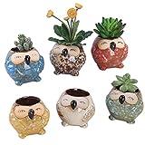 Mecotech 6er Set 8cm Eule Topf Keramik Sukkulenten Töpfe Kaktus Pflanze Töpfe Kakteen Topf Klein Blumentöpfe Container Pflanzer Bonsai Töpfe mit einem Loch