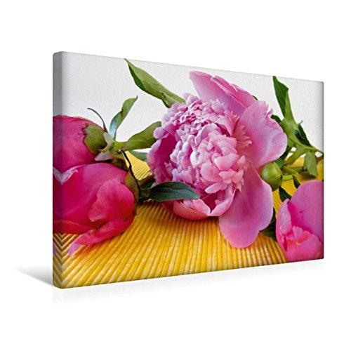 Momente Aromatherapie (Calvendo Premium Textil-Leinwand 45 cm x 30 cm quer, Pfingstrosen - EIN Motiv aus dem Kalender Momente zum Innehalten | Wandbild, Bild auf Keilrahmen. Leinwand, Leinwanddruck Gesundheit Gesundheit)