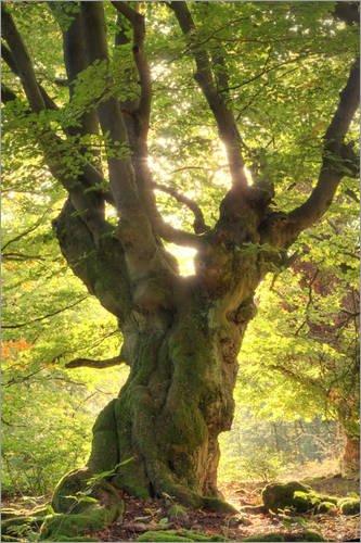Posterlounge Acrylglasbild 60 x 90 cm: Märchenbaum von Bieberchen - Wandbild, Acryl Glasbild, Druck auf Acryl Glas Bild