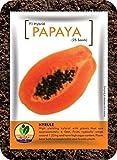 GroBro Papaya Hyrule - Orange Fleshed Dwarf Variety - Extemely Sweet Tasting - F1 Hybrid Seed