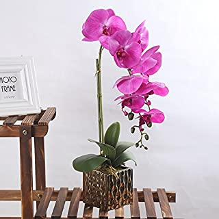 Alicemall Artificial Orchid Phalaenopsis in Pot of ceramic 22