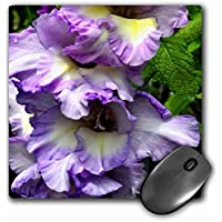 ET Photography Roses - A beautiful pink garden rose with petals like a fancy dress - MousePad (mp_165348_1)