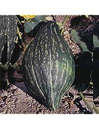 GEOPONICS 1 oz: GREENWINTER Squash Garden-NO-GMO, Herencia JARDINERÃA -VEGABLE