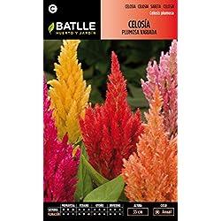 Semillas Batlle 092001BOLS - Celosía variada