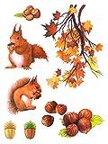 dpr. Fensterbild Set 7-tlg. Eichhörnchen Blätter AST Nüsse Herbst Fenstersticker Fensterdeko Herbstdeko