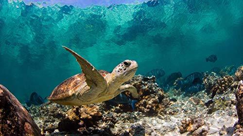 LIWEIXKY DIY Malen Nach Zahlen Kits, Ölgemälde, Malen Nach Zahlen Für Erwachsene Leinwand Home Decor, Sea Turtle Schwimmen, Mit Rahmen, 40x50cm -