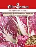 Salatsamen - Radicchio di Trevisio von Dürr-Samen