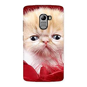 Delighted Kitty In Red Fur Back Case Cover for Lenovo K4 Note