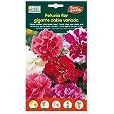 Semillas petunia flor gigante doble variada. Pack 2 sobres