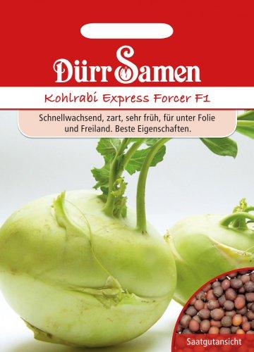 Kohlsamen - Kohlrabi Express Forcer F1 von Dürr-Samen
