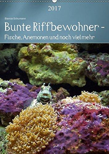 Bunte Riffbewohner - Fische, Anemonen und noch viel mehr (Wandkalender 2017 DIN A2 hoch): Tropische Riffe bieten eine große Vielfalt an Lebewesen und Farben (Planer, 14 Seiten)