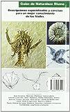 Image de Fosiles