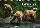 Grizzlys - Der Kalender (Wandkalender 2017 DIN A4 quer): Grizzlybären - ein Fotoshooting in der Wildnis Alaskas (Geburtstagskalender, 14 Seiten ) (CALVENDO Tiere) - Max Steinwald