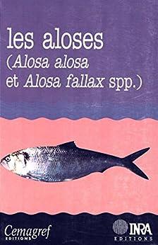 Les aloses (Alosa alosa et Alosa fallax spp.): Écobiologie et variabilité des populations (Hydrobiologie et aquaculture) de [Elie, Pierre, Baglinière, Jean-Luc]