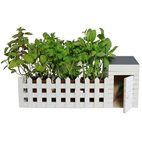 Mini Jardin Du0027Intérieur U2013 Idée Cadeau Plante Du0027intérieur