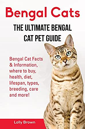 8 Things All Bengal Cat Owners Know to Be True