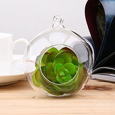 8 cm Klarglas Runde 1 Loch Blume Stehen Topfpflanze Hängende Hydrokultur für Home Office Hochzeit Dekoration von Formulaone - Du und dein Garten
