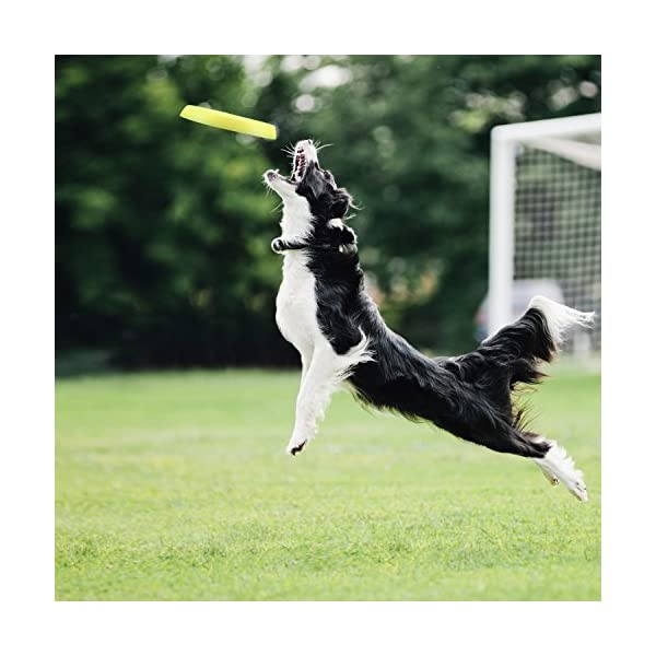LaRoo Dog Flying Disc Dog Frisbee ABS Material Floatable Dog Toys Pet Frisbee for Puppies, Small, Medium and Large Dogs 7