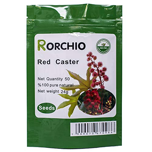 50 ricin rouge RICIN Ricinus communis NON-OGM Seeds ~ jardin de Chris