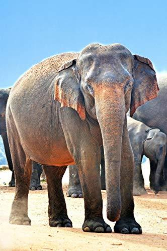 Puzzle Adulto 1000 Piezas Grupo De Animales De Elefantes El Mejor Regalo...