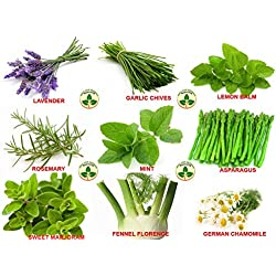 Only For Organic Combo of Nine herbs ! Mint, Rosemary, Lavender, Chives, Lemon Balm, Asparagus, Fennel Florence (Pack of 30)
