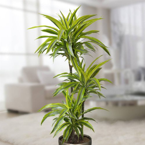 Best plants for the bathroom | Indoor Gardener on best plants for basements, best plants for wet areas, best plants for zone 6b, best plants for containers patio, best plants for zone 10, best plants for atriums, best plants for high desert, best plants for feng shui, best plants for glass, best plants for privacy, best plants for sun room, best plants for entryway, plants that thrive in bathrooms, best plants for pool area, best plants for around a patio, best outdoor plants, best plants for water, best plants for gardening, best plants for dark rooms, best plants for decks,