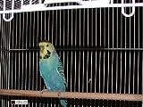 Jaula-de-Pjaros-Color-Blanco-Extra-grande-tazmin-periquito-Islas-Canarias-Parrotlets-pjaros