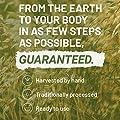 Biotin hochdosiert 10.000 mcg Kapseln von Nutritrust®– 200% vegane extra Wirkung – hochwertige Nährstoffe für Haare, Haut & Nägel – wasserlösliches Vitamin B7 – Mittel gegen Haarausfall von NutriTrust bei Gartenmöbel von Du und Dein Garten