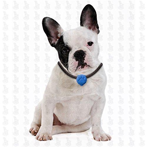 6 Stück Hunde Leuchtanhänger Leuchthalsband Led Hundehalsband LH10 Blinkie von Leuchthund® Led Anhänger (6 Stück gemischt – 1 je Farbe) - 5