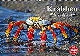 Krabben. Witzige Monster (Wandkalender 2019 DIN A2 quer): Kleine Aliens zum genaueren Betrachten (Geburtstagskalender, 14 Seiten ) (CALVENDO Tiere)