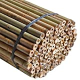 50 x Heavy Duty Thick Strong Professional Bamboo Plant Support Garden Canes Good Quality 2ft x 7ft , 8mm to 16mm Thick Cheap Budget Price. by Sandal Stars ® (40, 6ft (180cm))