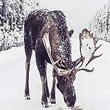 WJY Elch im Schnee Print Winter Snowy Poster Kunst Leinwand Malerei Bild Rustikale Weihnachtsdekor für Wohnzimmer Home Wanddekoration 60 cm x 90 cm Kein Rahmen