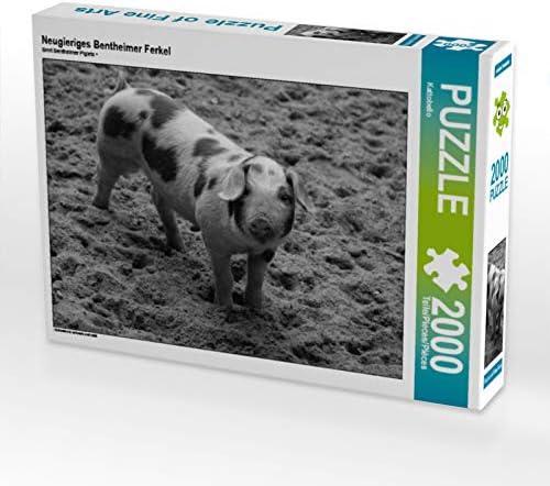 CALVENDO Puzzle Neugieriges Bentheimer Ferkel 2000 Teile Lege-Grösse 90 x 67 cm Foto-Puzzle Bild Von | Mende
