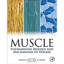 Muscle: Fundamental Biology and Mechanisms of Disease