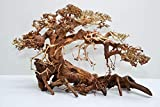Bonsai Baum XL original Foto Nr.12012 Wurzel Holz Aquarium Deko Aquascaping Bonsaibaum Dekoration Landschaft Moos
