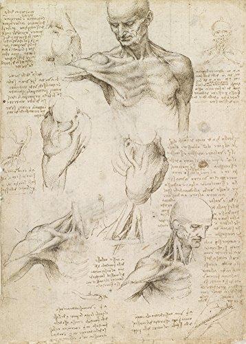 Vintage Anatomie LEONARDO da VINCI Oberflächliche Anatomie der Schulter und Nacken, 14-15 Jahrhundert. 250 g/m², glänzend, Kunstdruck, A3, Reproduktion (Zahlen Medizinische Diagramm)