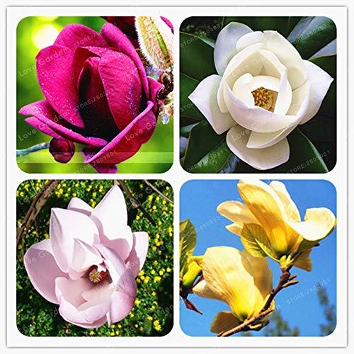 Magnolia Mixes The Best Amazon Price In Savemoneyes