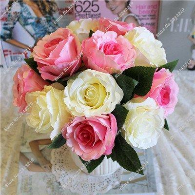 Exotique Miniature Bonsai Fleur Rose Rosas Graine Bricolage Jardin Maison Ménage et embellissant de purification d'air 110 Pcs/Sac