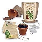 Pflanze einen Baum - Baumsaat-Set Rotfichte