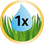 GimCat Hydro-Grass - Fresh cat grass harvested from certified open fields, ready in only 5 to 8 days - 1 bowl (1 x 150 g… 6
