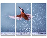 Paul Sinus Art Leinwandbilder   Bilder Leinwand 130x90cm Eisvogel im Wasser