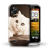 Stuff4® Hülle/Case für HTC Desire X/Perser Lange Haare Katze Muster Katze/Katzenrassen Kollektion
