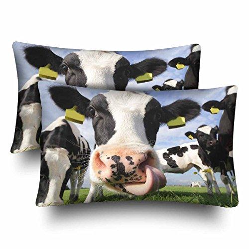 InterestPrint Holstein Kuh im Feld Licking Its Nase Kissenbezüge Standard Größe 20x30 Set 2 Stück rechteckig Kissenbezug Schutz für Home Couch Sofa Bettwäsche Deko -