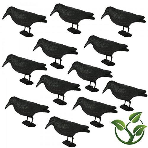 Lot de corbeau taubenschreck lummy «»