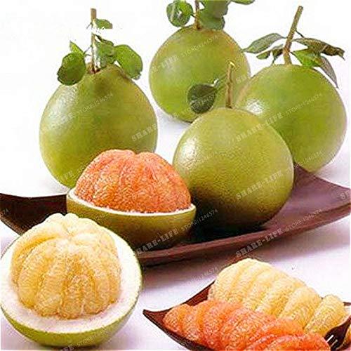 Pinkdose Thai Pomelo Citrus Maxima Pomelo Traubenfrucht 30 STÜCKE Bonsai Von Thailand Seltene Frucht Bonsai Für Hausgarten Pflanzen Obstpflanze